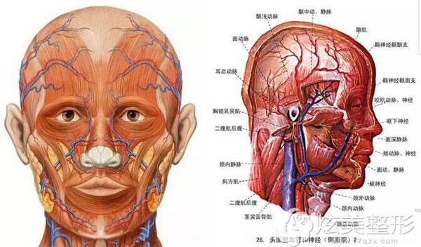 头面部血管和神经较多,容易注射失败