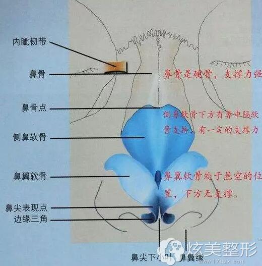 鼻子结构图