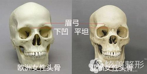 在面部骨骼中眉弓的所在位置
