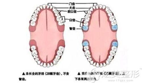 智齿位于口腔的部位