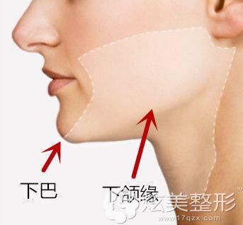 下巴和下颌缘的位置